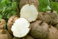 Ampuhnya Cream Pembesar Payudara Berbahan Dasar Pueraria Mirifica
